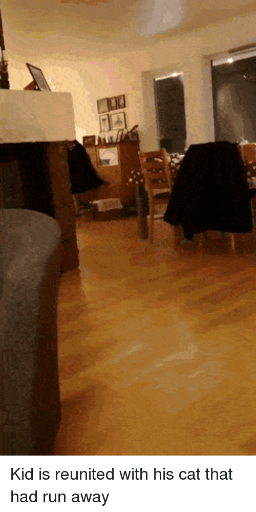 Run, Cat, and Kid: Kid is reunited with his cat that had run away