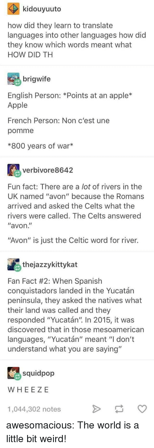 "Apple, Avon, and Celtic: kidouyuuto  how did they learn to translate  languages into other languages how did  they know which words meant what  HOW DID TH  brigwife  English Person: *Points at an apple*  Apple  French Person: Non c'est une  pomme  *800 years of war*  verbivore8642  Fun fact: There are a lot of rivers in thee  UK named ""avon"" because the Romans  arrived and asked the Celts what the  rivers were called. The Celts answered  ""avon  ""Avon"" is just the Celtic word for river.  thejazzykittykat  Fan Fact #2: When Spanish  conquistadors landed in the Yucatán  peninsula, they asked the natives what  their land was called and they  responded ""Yucatán"" In 2015, it was  discovered that in those mesoamerican  languages, ""Yucatán"" meant ""I don't  understand what you are saying""  squidpop  WHEE ZE  1,044,302 notes awesomacious:  The world is a little bit weird!"