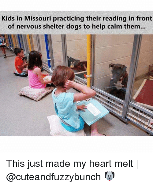Fronting: Kids in Missouri practicing their reading in front  of nervous shelter dogs to help calm them.. This just made my heart melt | @cuteandfuzzybunch 🐶