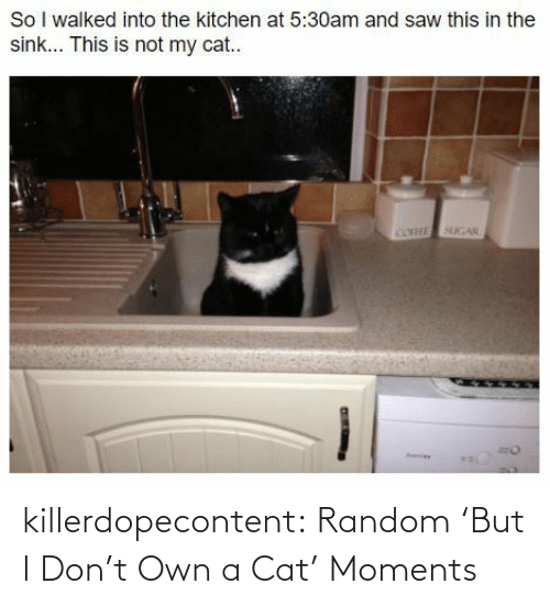 medium: killerdopecontent:  Random 'But I Don't Own a Cat' Moments