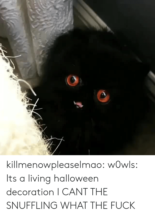 Halloween, Tumblr, and Blog: killmenowpleaselmao: w0wls: Its a living halloween decoration I CANT THE SNUFFLING WHAT THE FUCK
