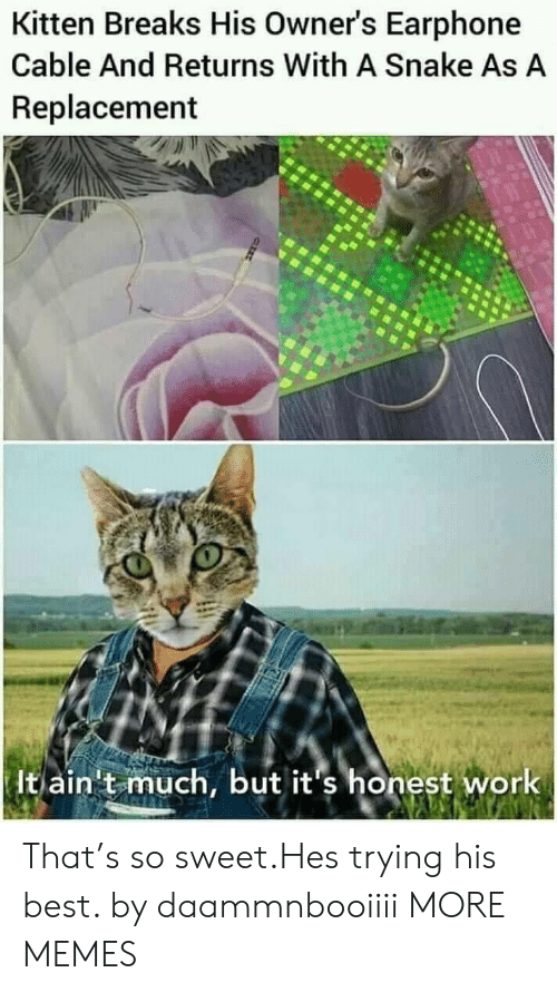 Dank, Memes, and Target: Kitten Breaks His Owner's Earphone  Cable And Returns With A Snake As A  Replacement  It ain't much, but it's honest work That's so sweet.Hes trying his best. by daammnbooiiii MORE MEMES