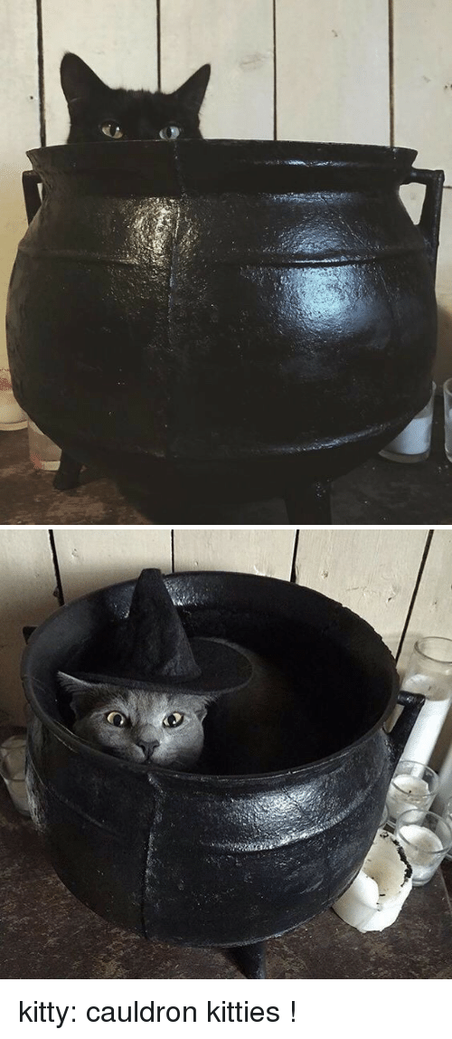 Kitties: kitty: cauldron kitties !