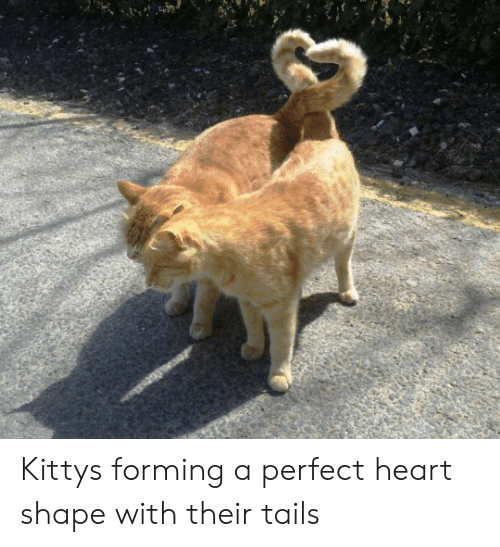 heart shape: Kittys forming a perfect heart shape with their tails