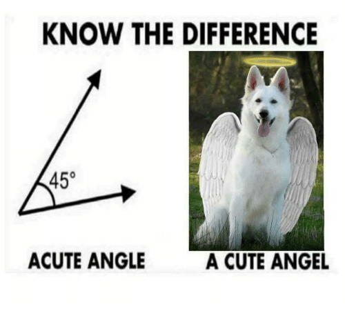 Cute, Memes, and Angel: KNOW THE DIFFERENCE  0  ACUTE ANGLE  A CUTE ANGEL