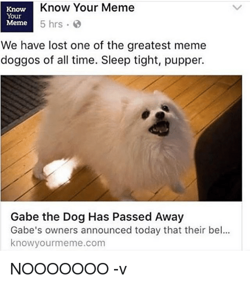 knowyourmeme: Know Your Meme  Know  Your  Meme  5 hrs  We have lost one of the greatest meme  doggos of all time. Sleep tight, pupper.  Gabe the Dog Has Passed Away  Gabe's owners announced today that their bel...  knowyourmeme.com NOOOOOOO -v