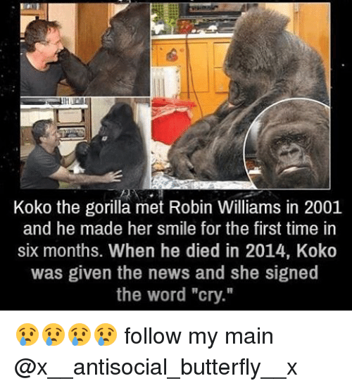 "Antisociable: Koko the gorilla met Robin Williams in 2001  and he made her smile for the first time in  six months. When he died in 2014, Koko  was given the news and she signed  the word ""cry."" 😢😢😢😢 follow my main @x__antisocial_butterfly__x"