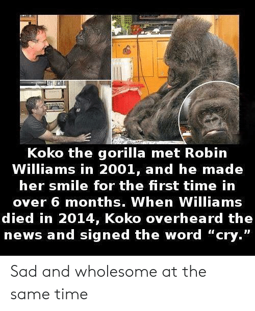 "Robin Williams: Koko the gorilla met Robin  Williams in 2001, and he made  her smile for the first time in  over 6 months. When Williams  died in 2014, Koko overheard the  news and signed the word ""cry."" Sad and wholesome at the same time"