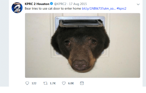 Bear, Home, and Houston: KPRC 2 Houston@KPRC2-17 Aug 2015  Bear tries to use cat door to enter home bit.ly/1NBtk737utm-so.. #kprc2  12 1.76.0K