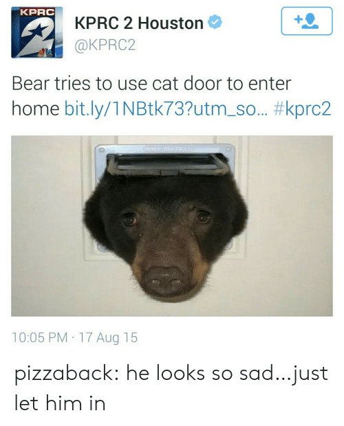 Tumblr, Bear, and Blog: KPRC  KPRC 2 Houston  @KPRC2  1  Bear tries to use cat door to enter  home bit.ly/1 N Btk73?utm-so.. #kprc2  10:05 PM 17 Aug 15 pizzaback: he looks so sad…just let him in