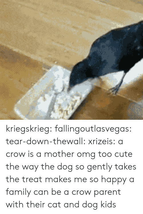 too cute: kriegskrieg: fallingoutlasvegas:  tear-down-thewall:  xrizeis:  a crow is a mother  omg too cute  the way the dog so gently takes the treat makes me so happy  a family can be a crow parent with their cat and dog kids