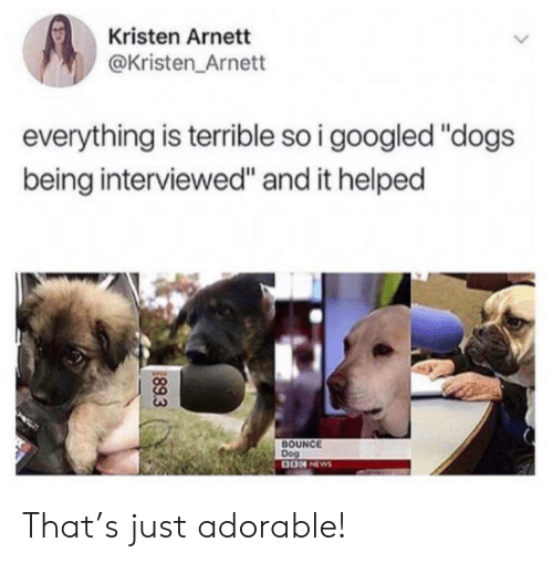 """Dogs, News, and Adorable: Kristen Arnett  @Kristen Arnett  everything is terrible so i googled """"dogs  being interviewed"""" and it helped  BOUNCE  Dog  0ON NEWS  89.3 That's just adorable!"""