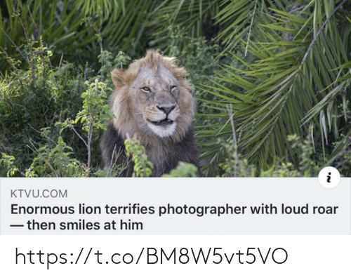 Lion: KTVU.COM  Enormous lion terrifies photographer with loud roar  - then smiles at him https://t.co/BM8W5vt5VO