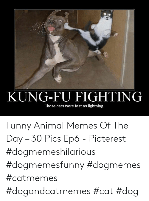 kung fu: KUNG-FU FIGHTING  Those cats were fast as lightning. Funny Animal Memes Of The Day – 30 Pics Ep6 - Picterest #dogmemeshilarious #dogmemesfunny #dogmemes #catmemes #dogandcatmemes #cat #dog