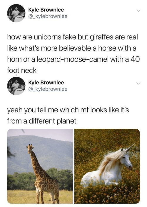 kyle: Kyle Brownlee  @_kylebrownlee  STAMA  how are unicorns fake but giraffes are real  like what's more believable a horse with a  horn or a leopard-moose-camel with a 40  foot neck  Kyle Brownlee  @_kylebrownlee  SZAMA  yeah you tell me which mf looks like it's  from a different planet