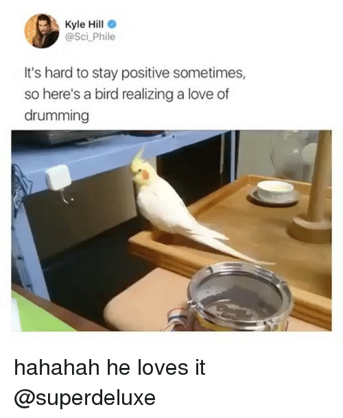 Love, Memes, and 🤖: Kyle Hill  @Sci Phile  It's hard to stay positive sometimes,  so here's a bird realizing a love of  drumming hahahah he loves it @superdeluxe