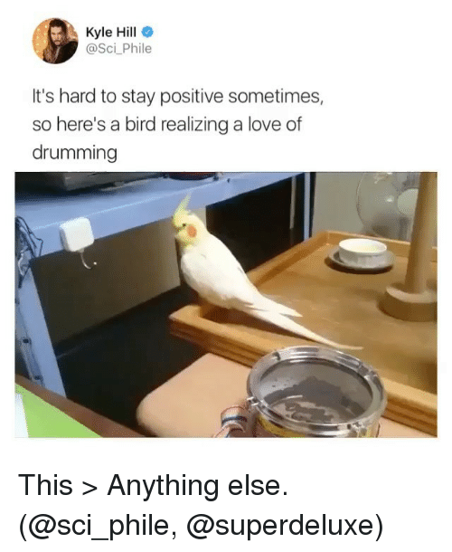 Funny, Love, and Sci: Kyle Hill  @Sci_Phile  It's hard to stay positive sometimes,  so here's a bird realizing a love of  drumming This > Anything else. (@sci_phile, @superdeluxe)