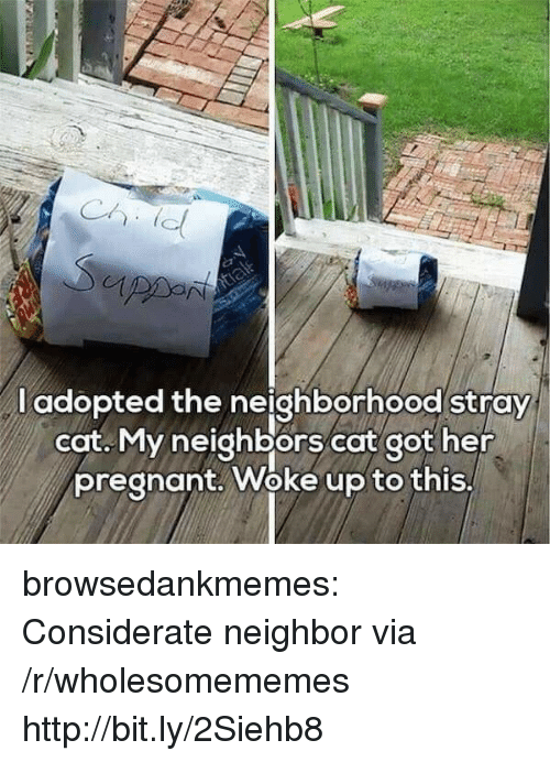 Woke Up To This: l adopted the neighborhood stray  cat. My neighbors cat got her  pregnant. Woke up to this, browsedankmemes:  Considerate neighbor via /r/wholesomememes http://bit.ly/2Siehb8
