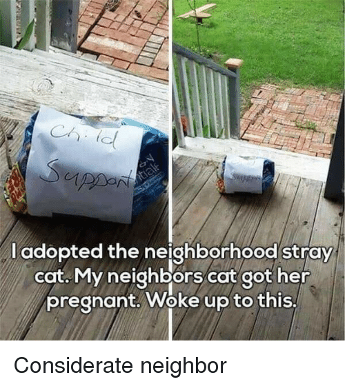 Woke Up To This: l adopted the neighborhood stray  cat. My neighbors cat got her  pregnant. Woke up to this, Considerate neighbor