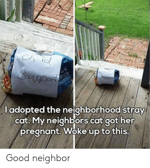 Woke Up To This: l adopted the neighborhood stray  cat. My neighbors cat got her  pregnant. Woke up to this, Good neighbor