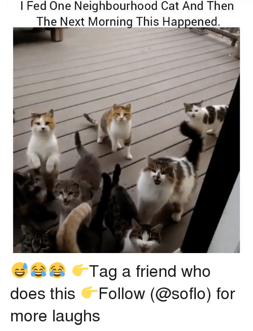 Memes, 🤖, and Cat: l Fed One Neighbourhood Cat And Then  The Next Morning This Happened 😅😂😂 👉Tag a friend who does this 👉Follow (@soflo) for more laughs