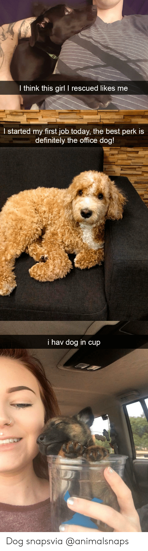 First Job: l think this girl I rescued likes me   l started my first job today, the best perk is  definitely the office doa   i hav dog in cup Dog snapsvia @animalsnaps​