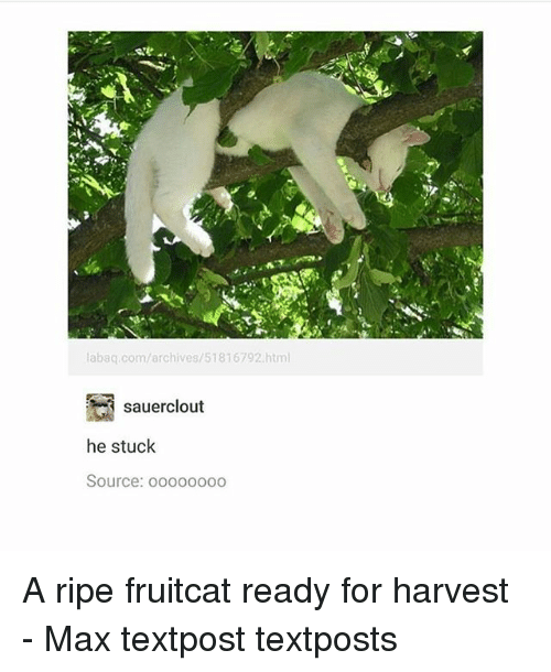 Memes, 🤖, and Html: labaq.com/archives/51816792.html  sauerclout  he stuck  Source: ooo000oo A ripe fruitcat ready for harvest - Max textpost textposts