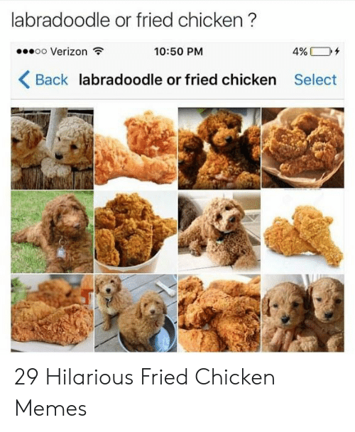 Memes, Verizon, and Chicken: labradoodle or fried chicken?  oo Verizon  10:50 PM  4%  Back labradoodle or fried chicken Select 29 Hilarious Fried Chicken Memes