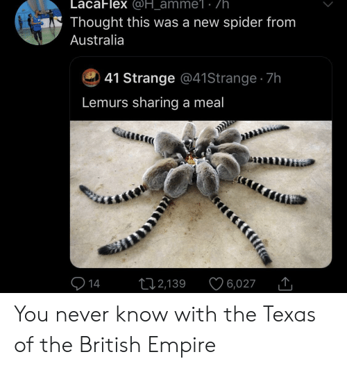 Empire, Spider, and Australia: LacaFlex @H_amme1 . /h  Thought this was a new spider from  Australia  41 Strange @41 Strange 7h  Lemurs sharing a meal  14  12,139  6,027 You never know with the Texas of the British Empire