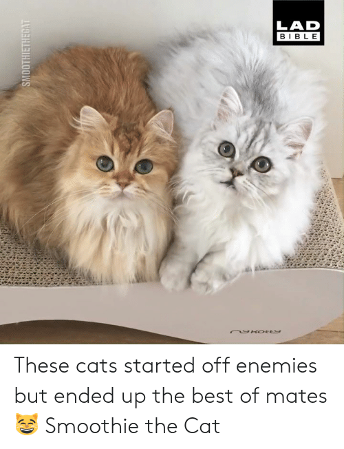 Cats, Dank, and Best: LAD  BIB LE These cats started off enemies but ended up the best of mates 😸  Smoothie the Cat
