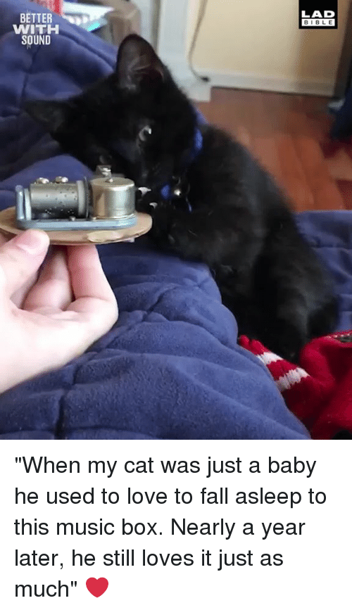 "Dank, Fall, and Love: LAD  BIBL E  BETTER  WITH  SOUND ""When my cat was just a baby he used to love to fall asleep to this music box. Nearly a year later, he still loves it just as much"" ❤️"