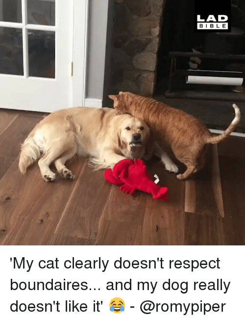 Memes, Respect, and 🤖: LAD  BIBL E 'My cat clearly doesn't respect boundaires... and my dog really doesn't like it' 😂 - @romypiper