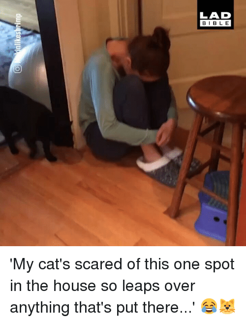 Cats, Memes, and House: LAD  BIBL E 'My cat's scared of this one spot in the house so leaps over anything that's put there...' 😂🐱