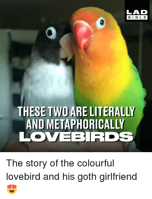 lovebird: LAD  BIBL E  THESE TWO ARE LITERALLY  AND METAPHORICALLY  LOVEBRDs The story of the colourful lovebird and his goth girlfriend 😍