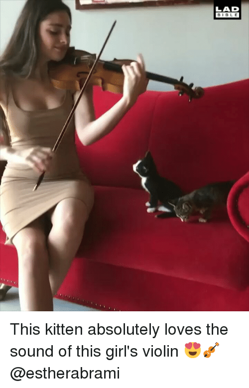 Girls, Memes, and 🤖: LAD  BIBL E This kitten absolutely loves the sound of this girl's violin 😍🎻 @estherabrami