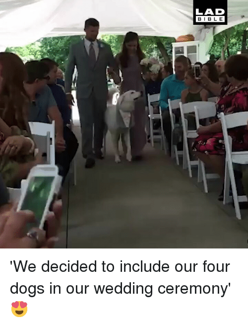 Dogs, Memes, and Wedding: LAD  BIBL E 'We decided to include our four dogs in our wedding ceremony' 😍