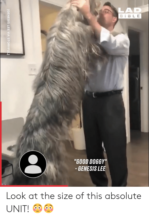 "Dank, Bible, and Genesis: LAD  BIBLE  ""GOOD DOGGY""  - GENESIS LEE  [GENESIS LEE VIA STORYFUL Look at the size of this absolute UNIT! 😳😳"