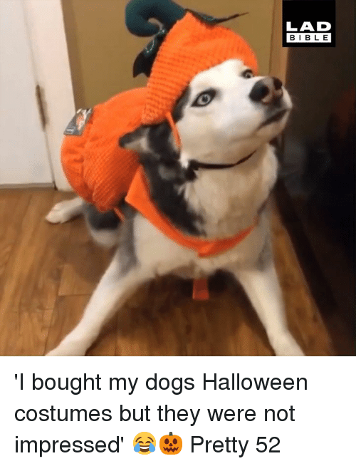 Halloween Costumes: LAD  BIBLE 'I bought my dogs Halloween costumes but they were not impressed' 😂🎃  Pretty 52