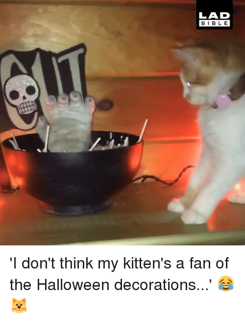 Dank, Halloween, and Bible: LAD  BIBLE 'I don't think my kitten's a fan of the Halloween decorations...' 😂🐱