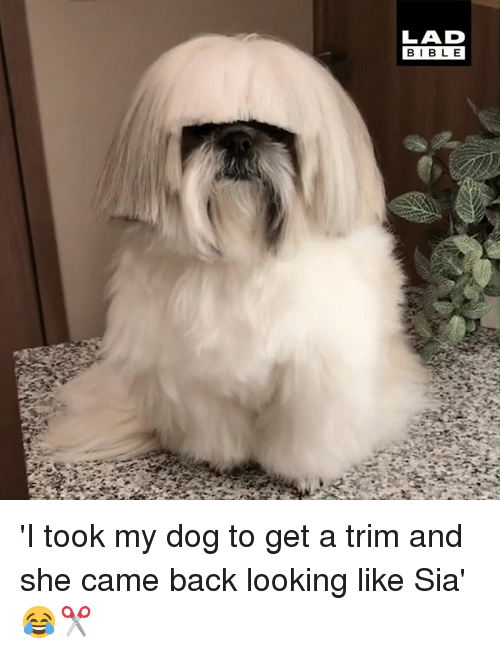 Dank, Bible, and Back: LAD  BIBLE 'I took my dog to get a trim and she came back looking like Sia' 😂✂️