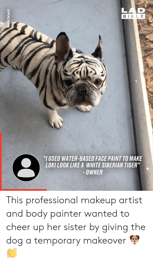 """Dank, Makeup, and Bible: LAD  BIBLE  """"I USED WATER-BASED FACE PAINT TO MAKE  LOKILOOK LIKE A WHITE SIBERIAN TIGER""""  -OWNER  [VIRALHOG This professional makeup artist and body painter wanted to cheer up her sister by giving the dog a temporary makeover 🐶👏"""