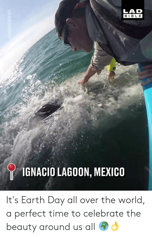 Dank, Bible, and Earth: LAD  BIBLE  IGNACIO LAGOON, MEXICO It's Earth Day all over the world, a perfect time to celebrate the beauty around us all 🌍👌