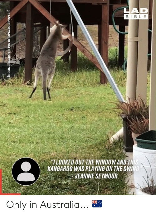 "Dank, Australia, and Bible: LAD  BIBLE  ""ILOOKED OUT THE WINDOW AND THIS  KANGAROO WAS PLAYING ON THE SWING  JEANNIE SEYMOUR  [JEANNIE SEYMOUR VIA STORYTRENDER]T Only in Australia... 🇦🇺"