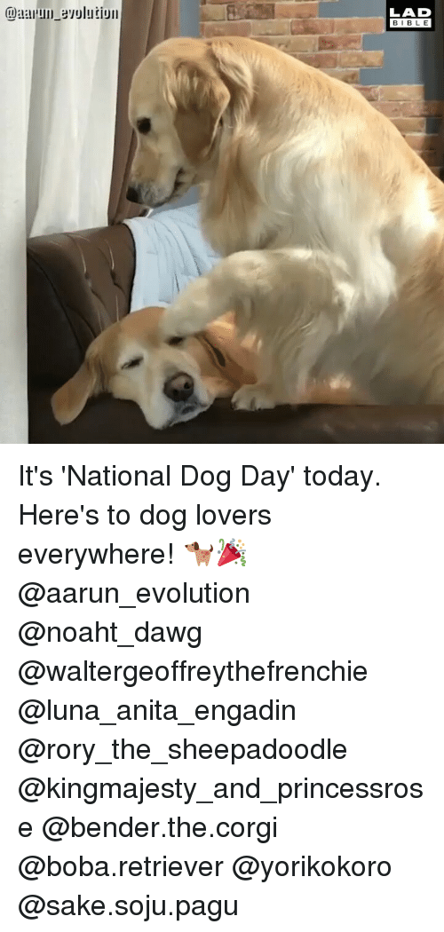 Corgi, Memes, and Bible: LAD  BIBLE It's 'National Dog Day' today. Here's to dog lovers everywhere! 🐕🎉 @aarun_evolution @noaht_dawg @waltergeoffreythefrenchie @luna_anita_engadin @rory_the_sheepadoodle @kingmajesty_and_princessrose @bender.the.corgi @boba.retriever @yorikokoro @sake.soju.pagu