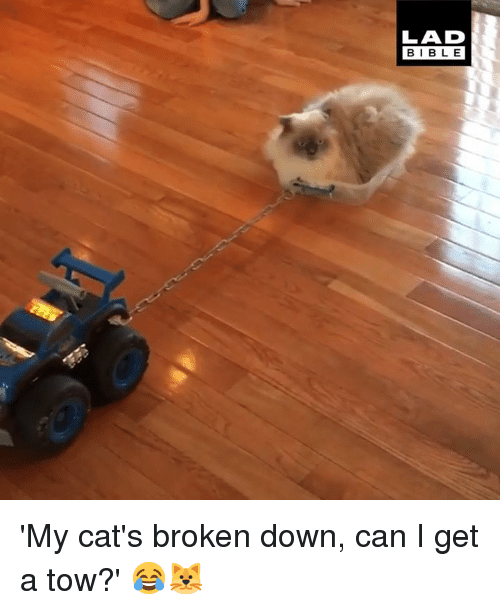 Cats, Dank, and Bible: LAD  BIBLE 'My cat's broken down, can I get a tow?' 😂🐱