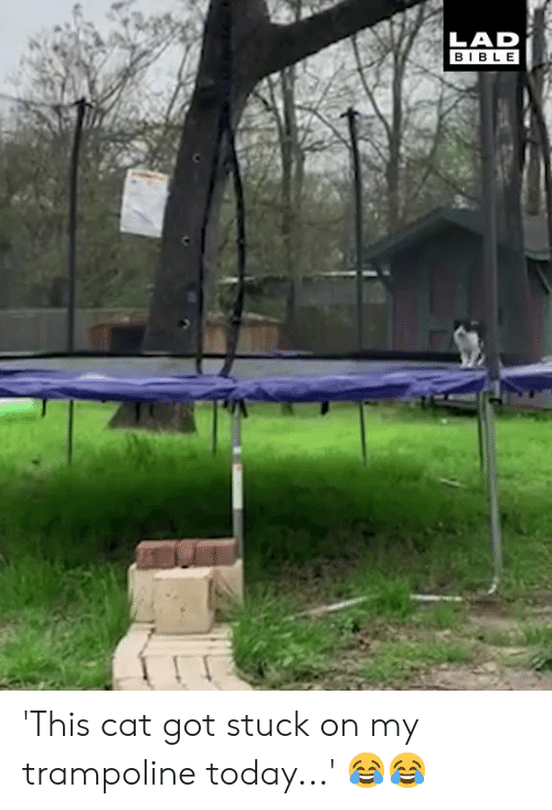 Dank, Bible, and Today: LAD  BIBLE 'This cat got stuck on my trampoline today...' 😂😂