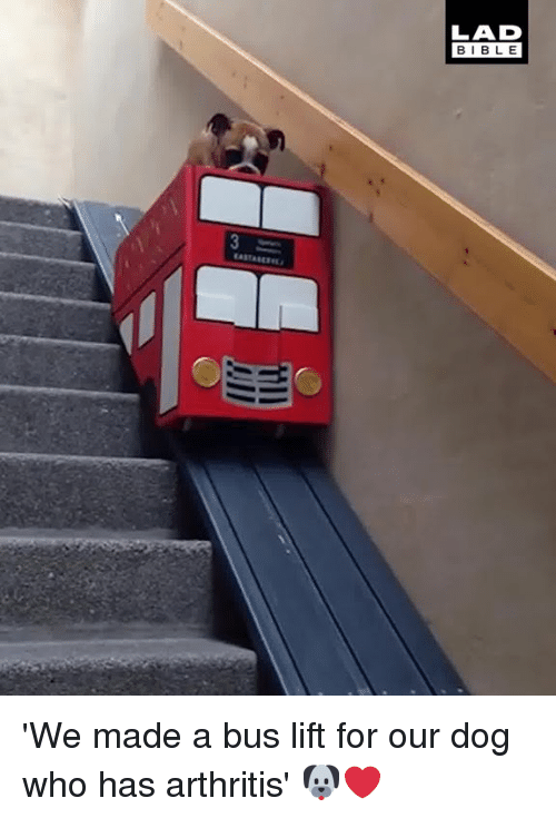 Dank, Arthritis, and Bible: LAD  BIBLE 'We made a bus lift for our dog who has arthritis' 🐶❤