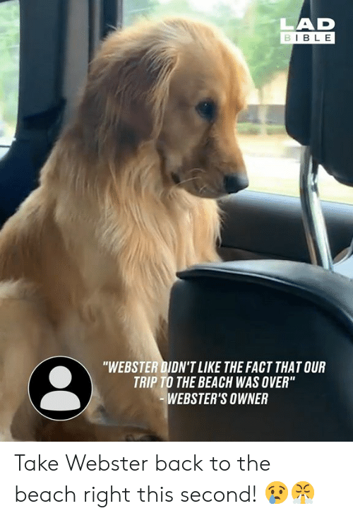 """Dank, Beach, and Bible: LAD  BIBLE  """"WEBSTER DIDN'T LIKE THE FACT THAT OUR  TRIP TO THE BEACH WAS OVER""""  WEBSTER'S OWNER Take Webster back to the beach right this second! 😢😤"""