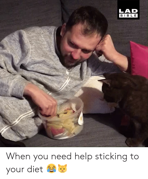 Dank, Bible, and Help: LAD  BIBLE When you need help sticking to your diet 😂🐱