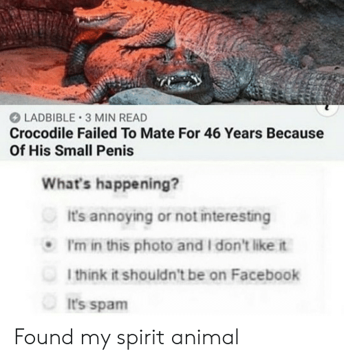 Spirit: LADBIBLE 3 MIN READ  Crocodile Failed To Mate For 46 Years Because  Of His Small Penis  What's happening?  It's annoying or not interesting  P'm in this photo and I don't like it  1think it shouldn't be on Facebook  It's spam Found my spirit animal
